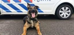 politiehond.jpg